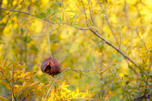 Photograph - Hanging On Til Winter by Melinda Ledsome