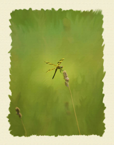 Wall Art - Photograph - Hanging Out by Dave Sandt