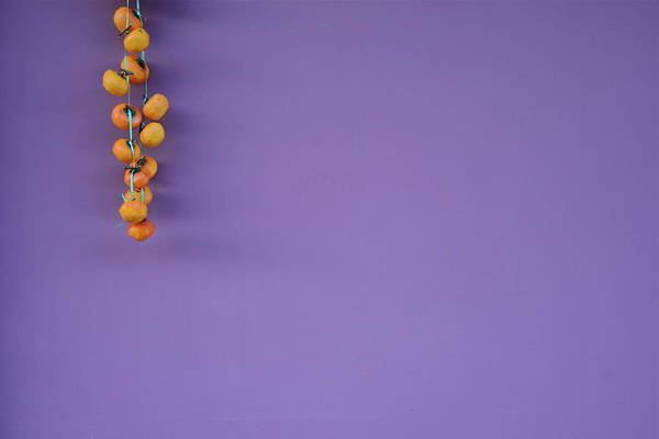 Hanging Photograph - Hanging Persimmons by Leigh Macarthur