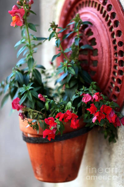 Photograph - Hanging Red Flowers by John Rizzuto