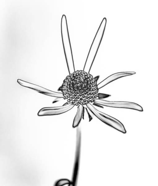 Solarized Photograph - Happiness Is... by Steve Harrington