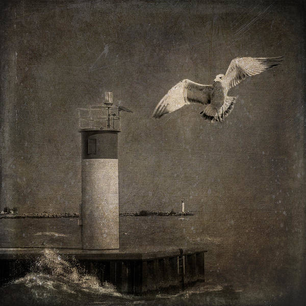 Happy And Free As A Seagull Art Print