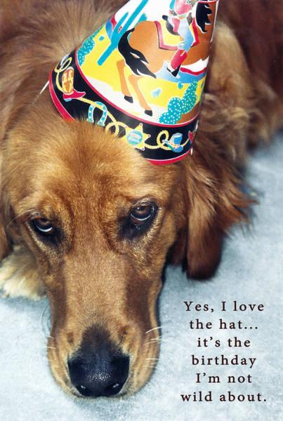 Photograph - Happy Birthday Buddy  by Lorraine Devon Wilke