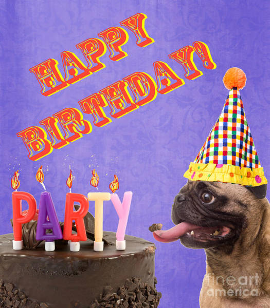 Pug Photograph - Happy Birthday Card by Edward Fielding