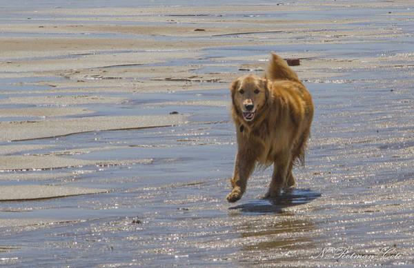 Photograph - Happy Dog At Beach by Natalie Rotman Cote