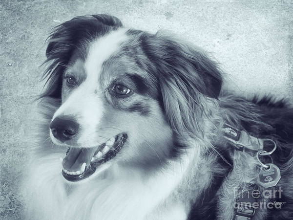 Photograph - Happy Dog by Jutta Maria Pusl