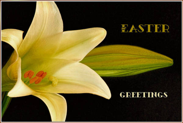 Comtemporary Photograph - Happy Easter Greeting Card Lily by Geraldine Scull