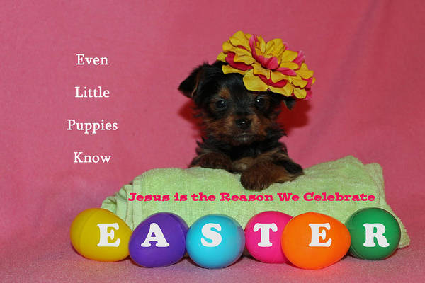 Photograph - Happy Easter by Lorna R Mills DBA  Lorna Rogers Photography