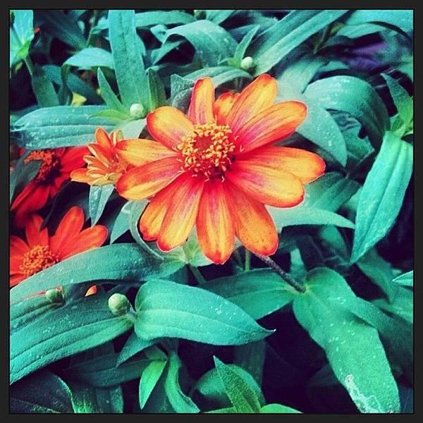 Wall Art - Photograph - Happy Flower #igersoflouisiana #nature by Scott Pellegrin