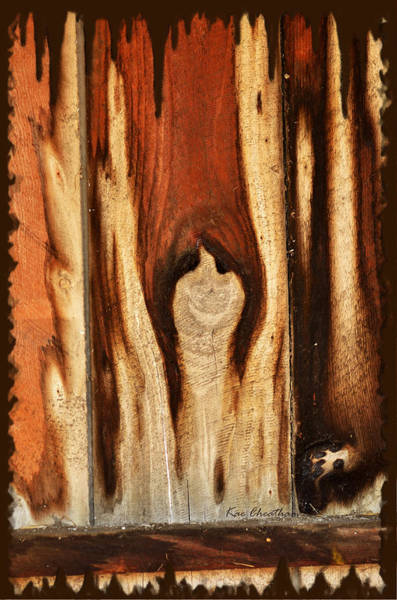 Photograph - Happy Ghost In Wood by Kae Cheatham