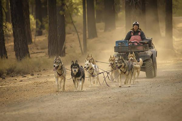 Photograph - Happy Huskies by Sherri Meyer