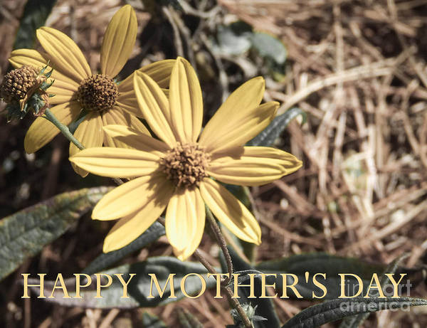 Photograph - Happy Mother's Day by Andrea Anderegg