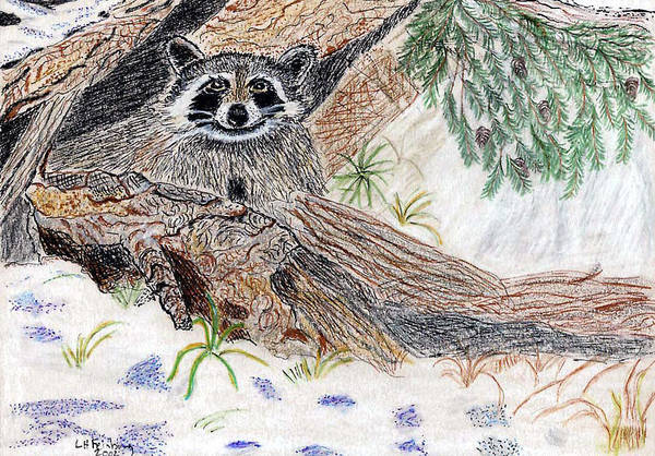 Painting - Happy Raccoon by Linda Feinberg