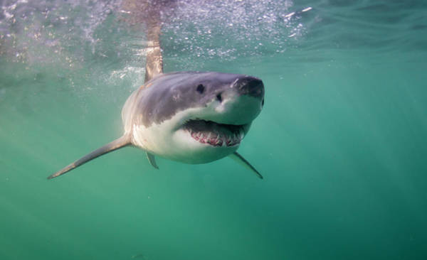 Scuba Diving Photograph - Happy Shark by By Wildestanimal