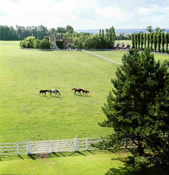 Wall Art - Photograph - Haras De Meautry Stud Farm by Henry Clarke