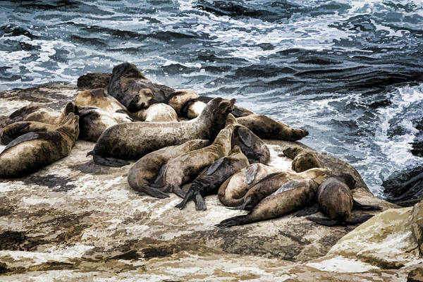 Digital Art - Harbor Seals by Photographic Art by Russel Ray Photos