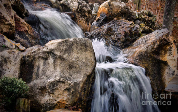 Photograph - Hard And Soft by Dave Bosse