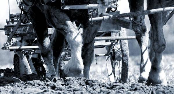 Plow Horses Photograph - Hard Labor  On The Farm by Dan Sproul