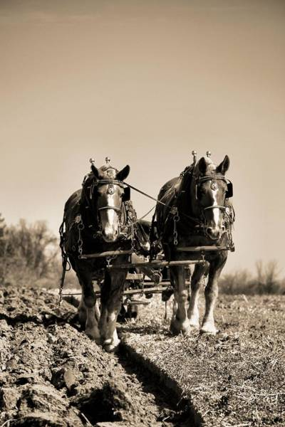 Plow Horses Photograph - Hard Times On The Farm by Dan Sproul
