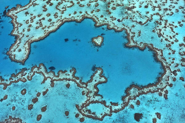 Photograph - Hardy Reef On Great Barrier Reef by Ingo Arndt