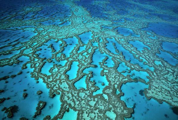 Photograph - Hardy Reef On The Great Barrier Reef Marine by Jean-Paul Ferrero