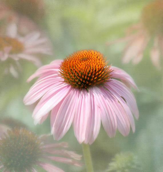 Coneflowers Photograph - Harmony  by Kim Hojnacki
