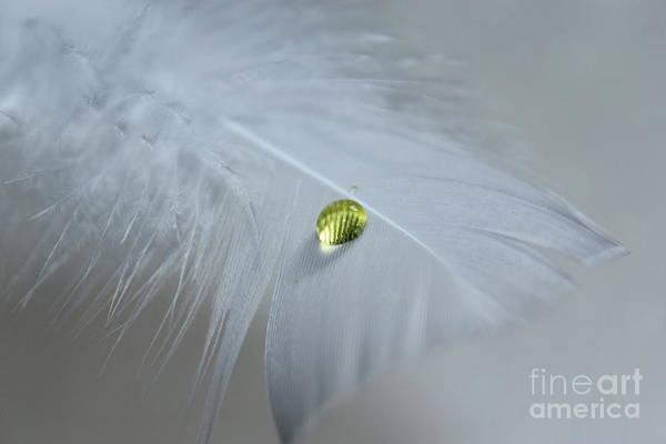 White Feathers Photograph - Harmony by Krissy Katsimbras