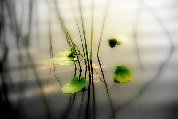 Water Lillies Photograph - Harmony Zen Photography II by Susanne Van Hulst