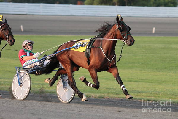 Wall Art - Photograph - Harness Racing by Dwight Cook