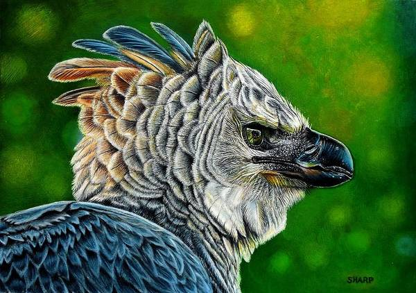 Roost Painting - Harpy Eagle by Karen Sharp