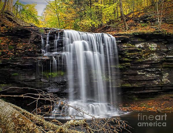 Photograph - Harrison Wright - Ricketts Glen by Nick Zelinsky
