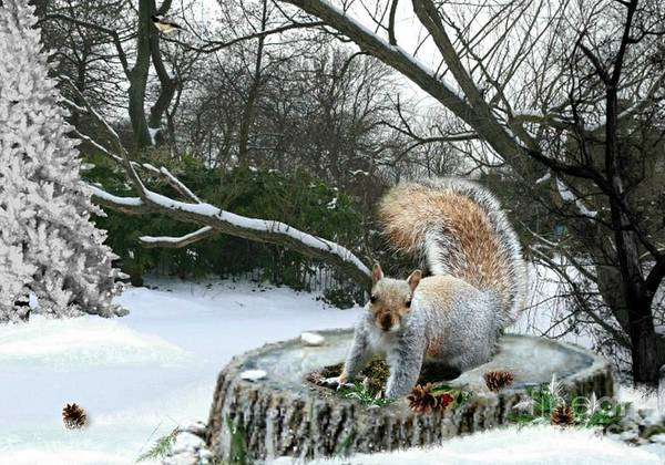 Mixed Media - Harry The Squirrel by Morag Bates