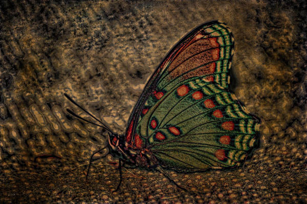 Photograph - Harvest Butterfly by Lesa Fine