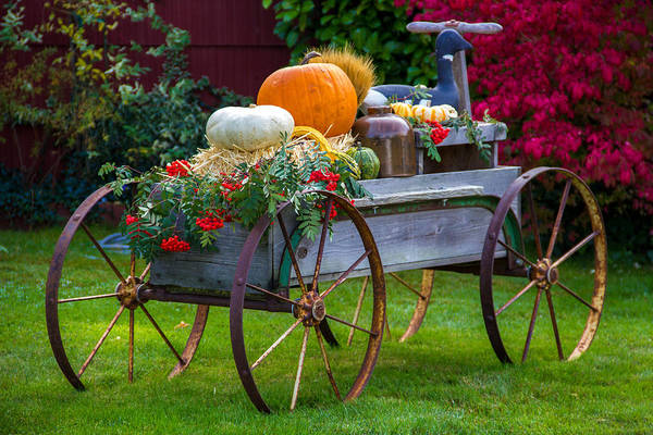 Plumas County Photograph - Harvest Display, Quincy California by Tirza Roring
