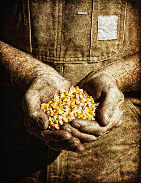 Photograph - Harvest In His Hands by Lincoln Rogers