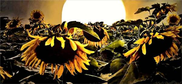 Photograph - Harvest Moon Over A Sunflower Farm by Danielle  Parent