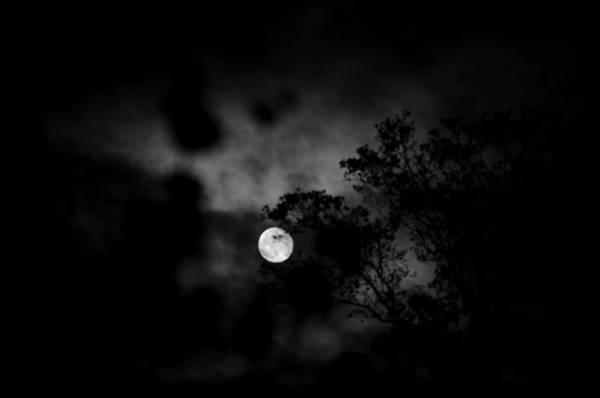 Photograph - Harvest Moon by Sharon Popek