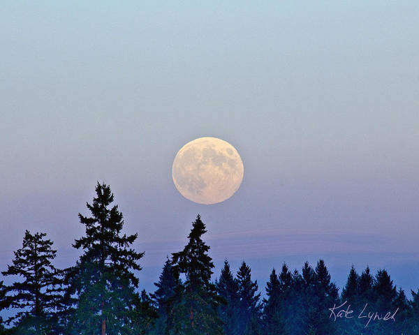 Photograph - Harvest Moonrise by Kate Lynch