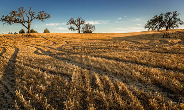 Photograph - Harvest Shadows by Tim Bryan