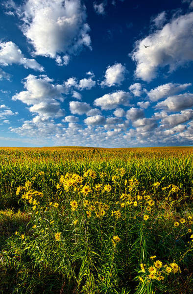 Corn Wall Art - Photograph - Harvest Time by Phil Koch