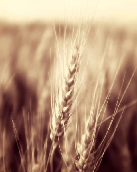 Photograph - Harvest Time by Trever Miller