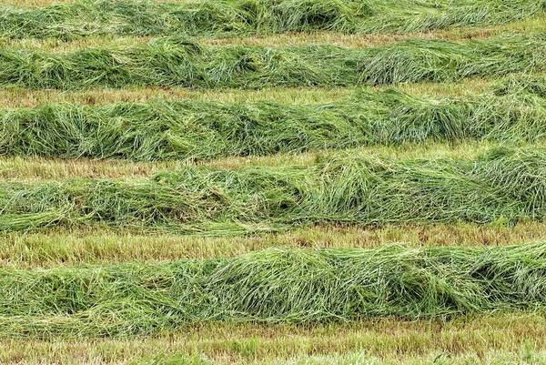 Row Crops Photograph - Harvested Grass by Simon Fraser/science Photo Library