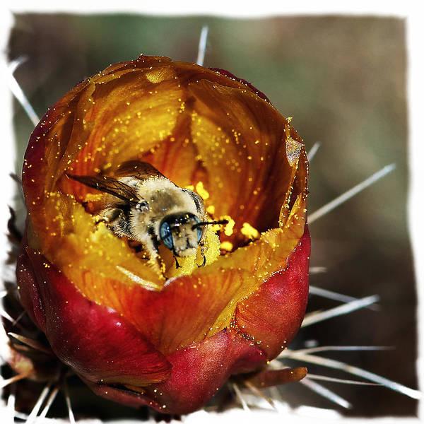 Photograph - Harvesting Honey - 2 by OLena Art - Lena Owens
