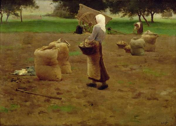 Potato Photograph - Harvesting Potatoes Oil On Canvas by Henri Lerolle