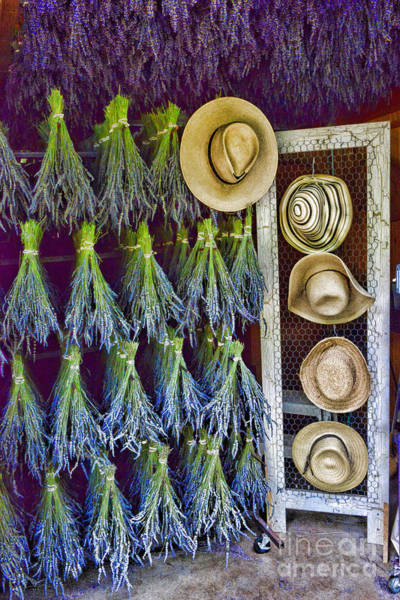 Wall Art - Photograph - Hats And Lavender by Paul Ward