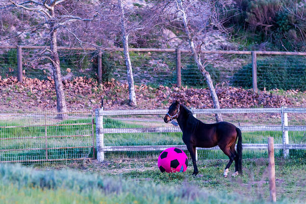Photograph - Having A Ball by Paul Johnson