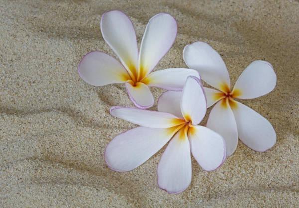 Photograph - Hawaiian Tropical Plumeria by Susan Candelario