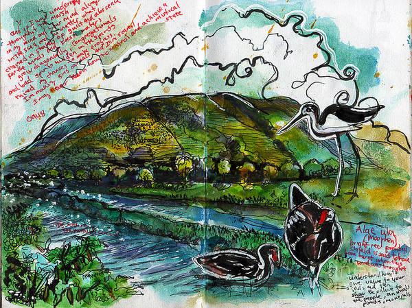 Oahu Drawing - Hawaii Birds by Sergio Garzon