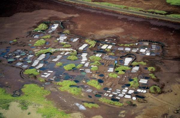 Wall Art - Photograph - Hawaii Salt Pans by Andy Crump/science Photo Library