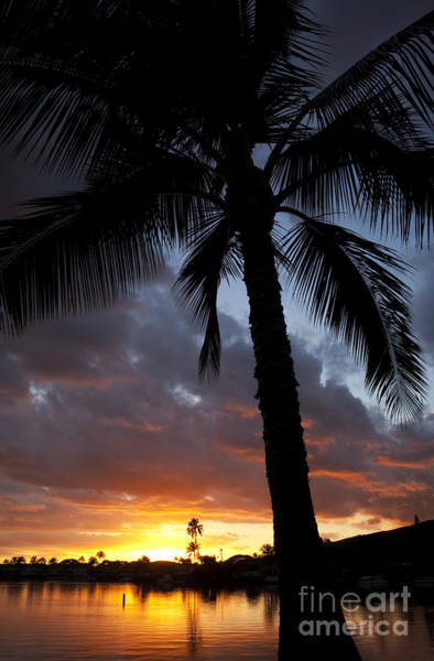 Photograph - Hawaii Sunset And Palm Tree by Charmian Vistaunet